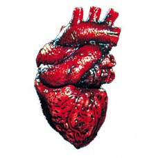 Body Parts Set x 2 - Heart & Brain