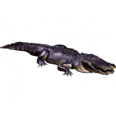 Alligator 12 foot prop